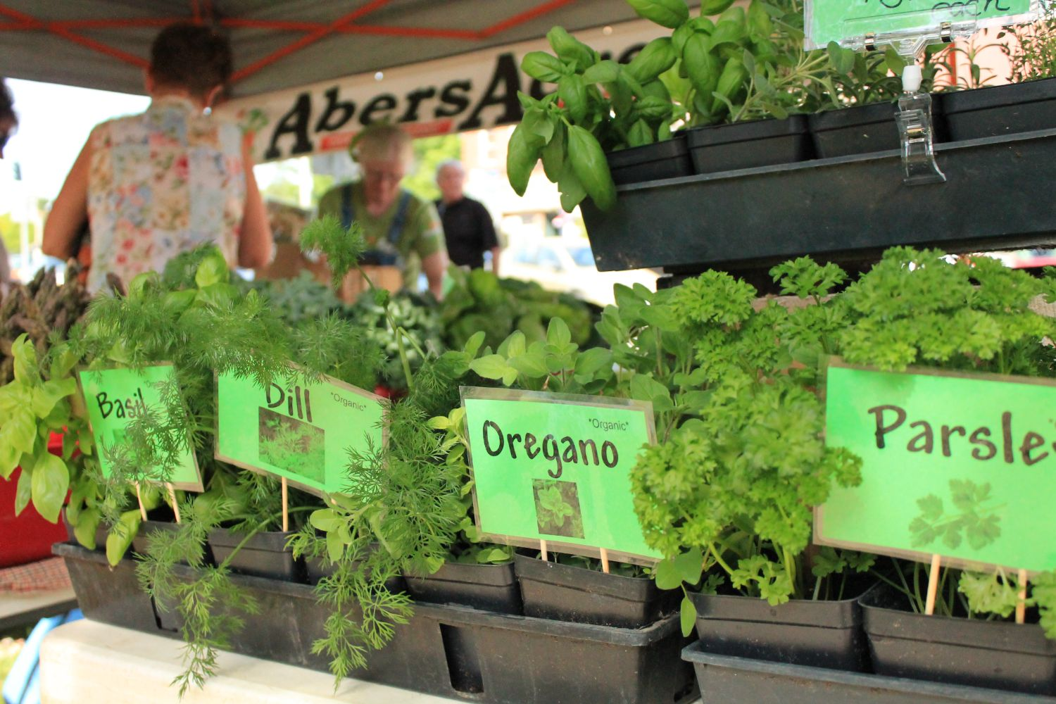 Herbs for sale at the Westfield Farmers Market