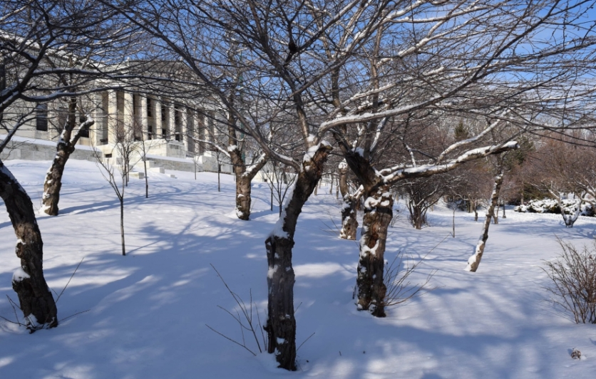 Cherry Trees in Winter at the Buffalo History Museum