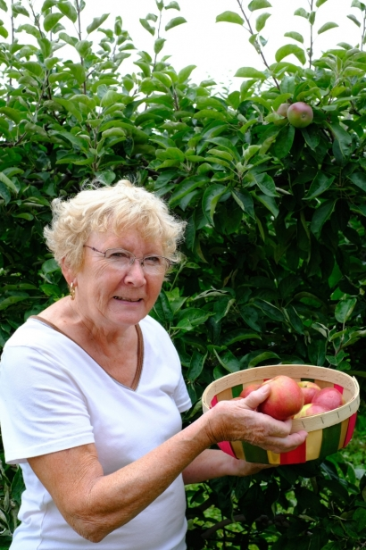 Jean Burch picks apples at Burch Farms in North East, PA
