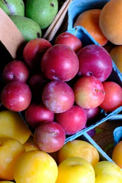 Fresh plums from Rahal Farms in North East, PA