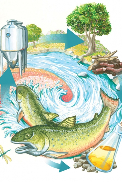 The TimberFish Technologies system illustrated by Greg Kellogg