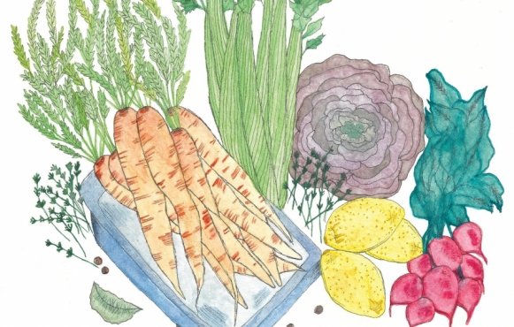 Vegetable illustrations by India Seychew