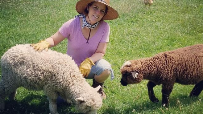 The sheep at Ballyhope Farm