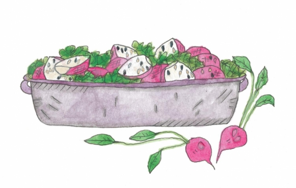 Brined Radishes illustrated by India Seychew